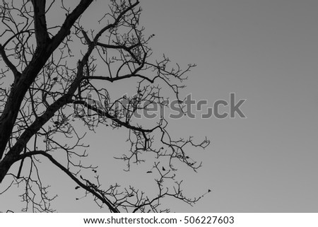 Leafless Tree. Black and white