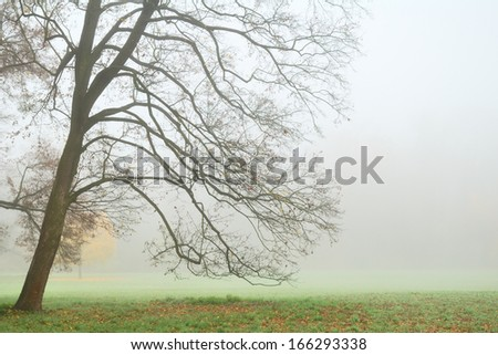 Leafless tree in dense fog in autumn - stock photo