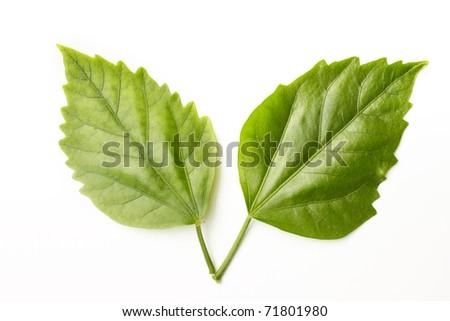 leafs - stock photo