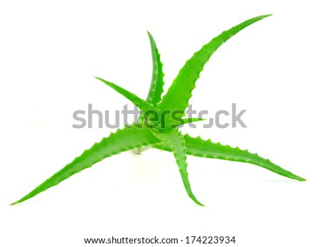 leafs of Aloe vera on white background