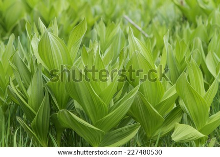 Leafy Green Plants Close Up - stock photo