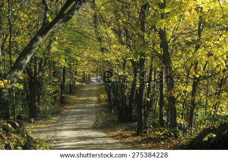 Leafy trees shade a narrow road in rural New England - stock photo