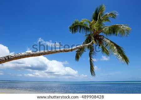 Leaning palm tree at Makaha'a island near Tongatapu island in Tonga. Kindom of Tonga is an archipelago comprised of 169 islands
