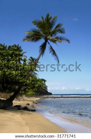 Leaning palm tree is framed by vivid blue sky.  Waves gently wash Kauai Hawaii sands. - stock photo