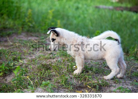 Learning of white puppy in the morning. - stock photo