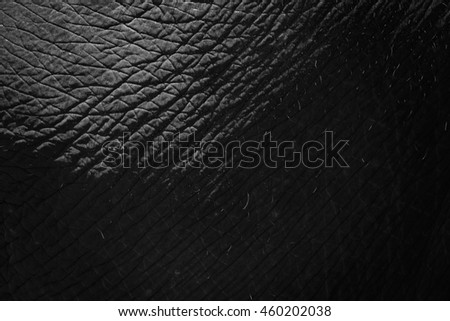 Leather of Thai elephant texture background.