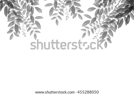 Leave in black and white color isolated on white
