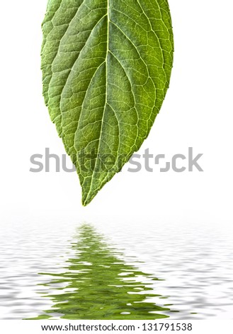 Leave with reflection - stock photo