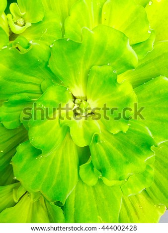 Leaves, Abstract green leaf background. Texture of a green leaf as background.  - stock photo