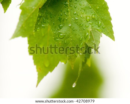 Leaves after rain - stock photo