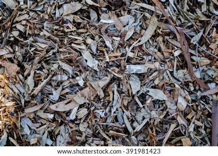 Leaves and bark