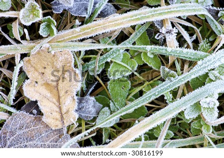 leaves and blades of grass frost