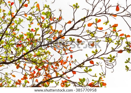 Leaves and Branches Tropical Almond Background