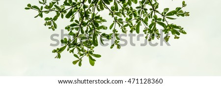 Leaves and branches with white background