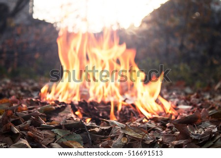 leaves and fire autumn concept
