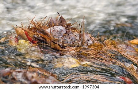 Leaves and pine needles in a stream