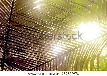 leaves and twig of palm Tree on sunlight background, yellow tone - stock photo
