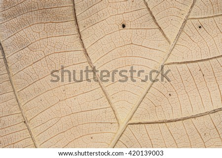 Leaves Background Leaves texture