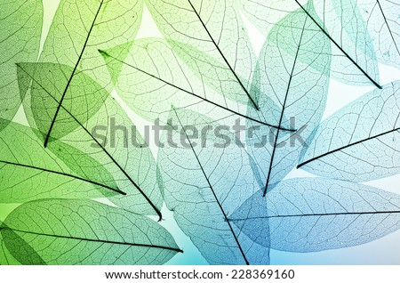 leaves background texture - stock photo