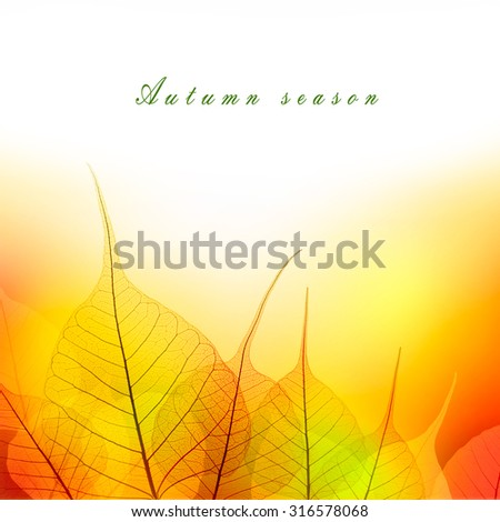 Leaves Border of Autumn color season on white background - beautiful design - stock photo