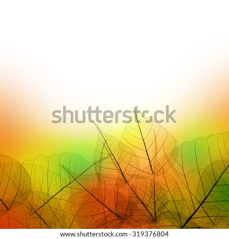 Leaves Border of Autumn season on white background - colorful design - stock photo