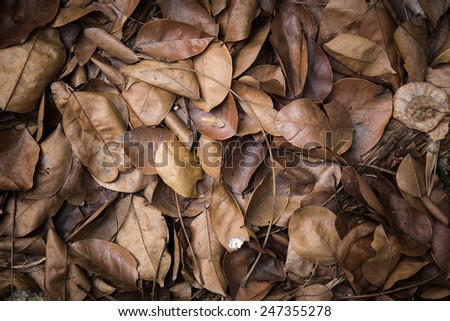leaves brown fall on the ground.