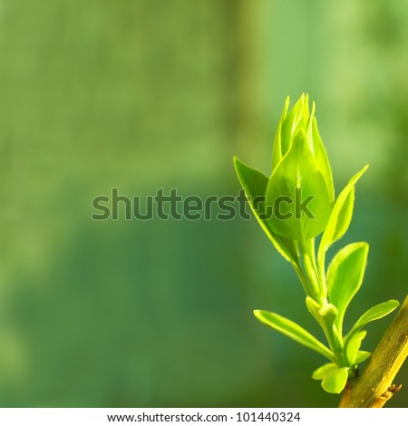 Leaves bud on the abstract green background with light specks - stock photo