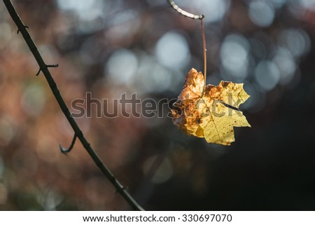 Leaves  - change - dying seasonal - environment  - stock photo