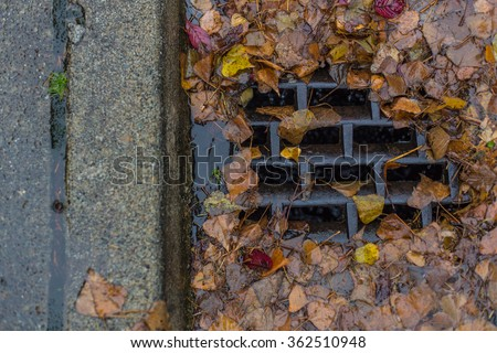 Leaves clogging a drain - stock photo