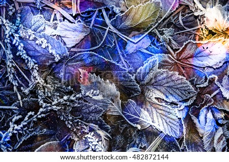 leaves covered with ice crystals - winter background