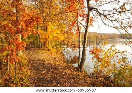 leaves covering a trail in autumn - stock photo