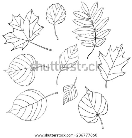 Leaves Doodles. Hand-drawn Style. - stock photo