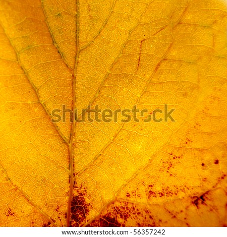 Leaves fall, and close-up - stock photo