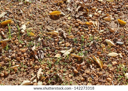 Leaves fallen from deciduous trees  in autumn litter the ground beneath providing mulch during winter months on the gravelly car park surface. - stock photo