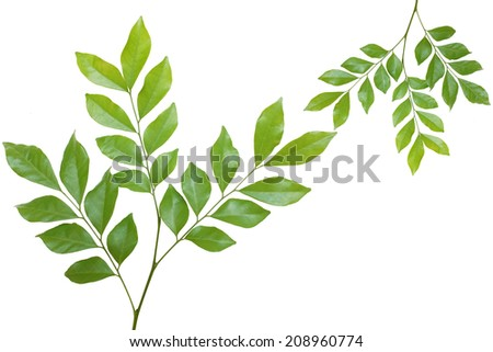 leaves frame isolated on white background.