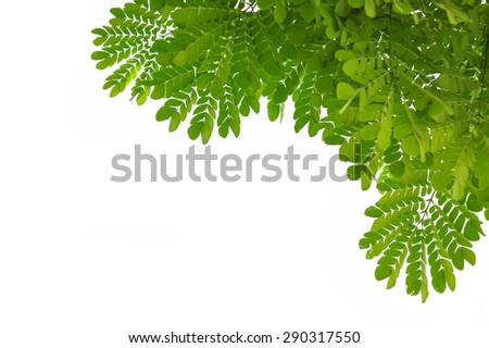 leaves frame on white background - stock photo