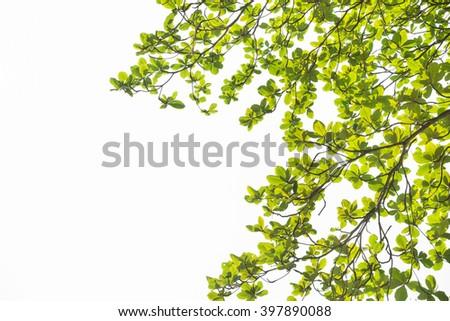 leaves frame on white background  - stock photo