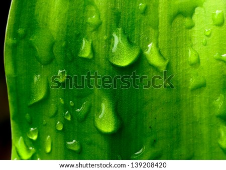 Leaves fresh water drop on Leaves in the nature for background design