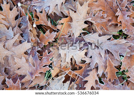 leaves frozen from the cold in winter