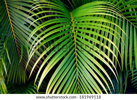 leaves green background - stock photo