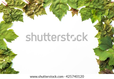Leaves green grapes isolated on white background.