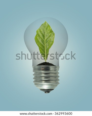 Leaves grow in a light bulb  on blue background