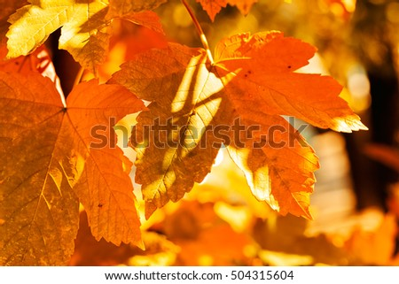 leaves in all the colors of autumn,note shallow depth of field