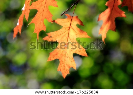leaves in fall - stock photo