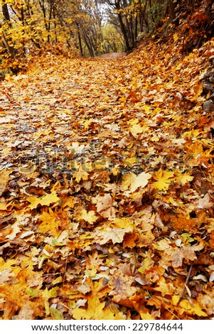 Leaves in forest, autumn - stock photo