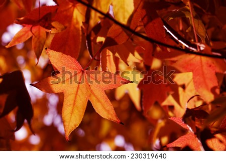 Leaves in forest,  beautiful autumn - stock photo