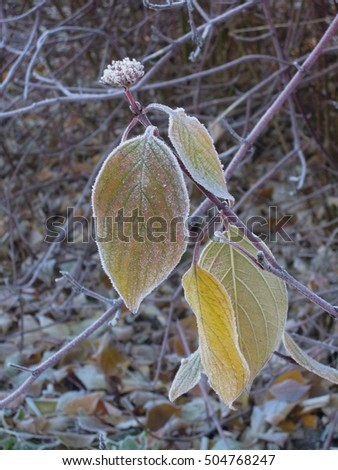 Leaves in freeze