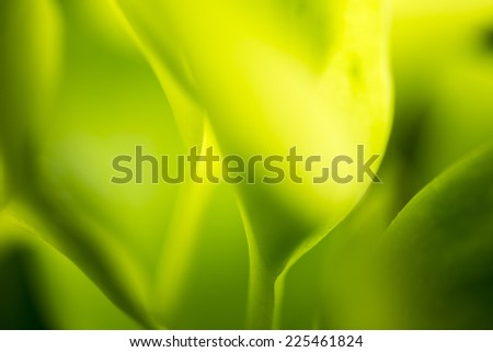 leaves in Mist - Stock Image  - stock photo