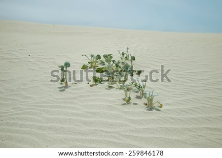 Leaves in the dunes of De hoop nature reserve, South Africa - stock photo