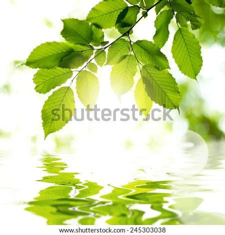 Leaves in the forest with reflection in water and sun light. Background - stock photo